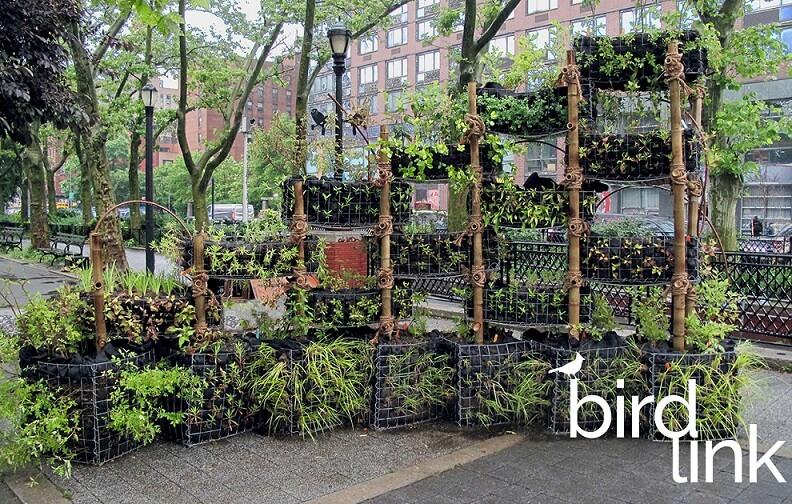 BIRDLINK Sara D Roosevelt Park, Manhattan
