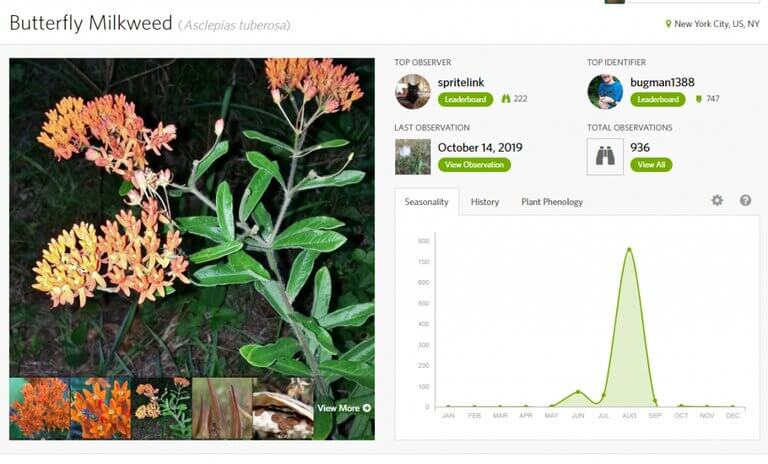 Biodiversity Research Butterfly Milkweed