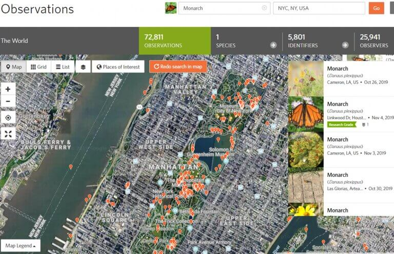 Biodiversity Research Monarch Butterfly NYC