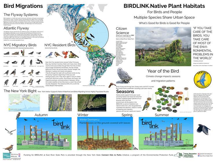 Bird and Habitat Infographic BIRDLINK