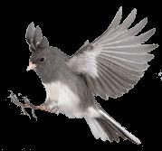 Birdlink NYC