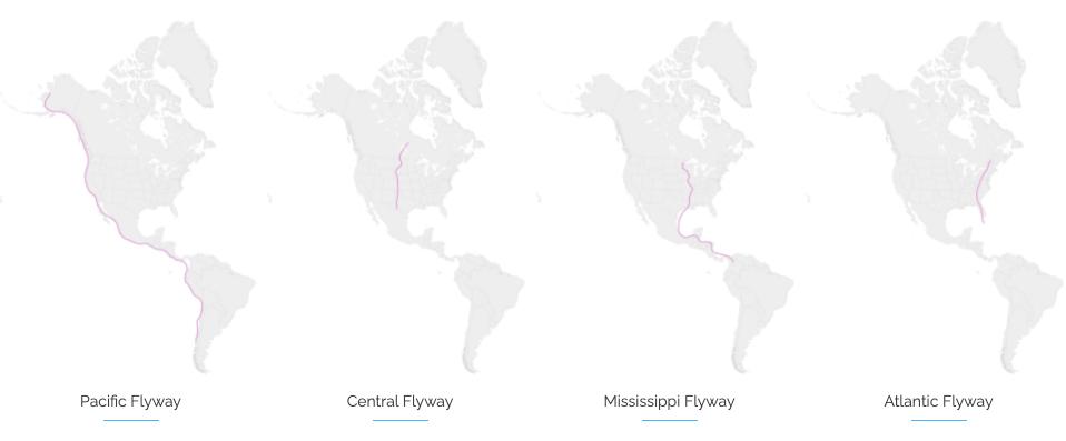 Migratory Bird Pathways United States