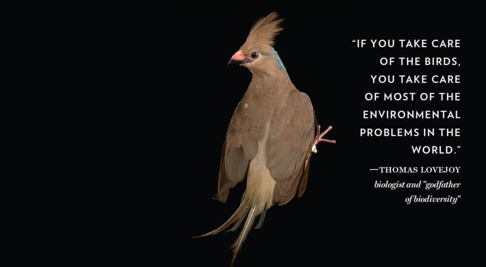 Thomas Lovejoy Bioligist Quote